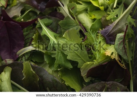 close up of green salad arugula on wood background