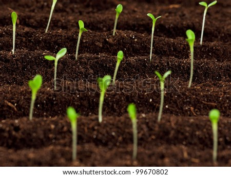 Close up of green seedling growing out of soil - stock photo