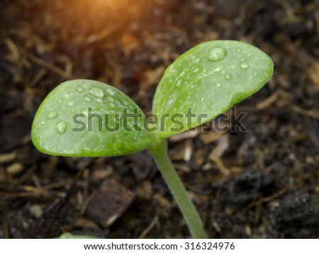 Close-up of green seedling growing out of soil with sunlight. - stock photo