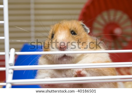 Close up of hamster trying to escape from cage
