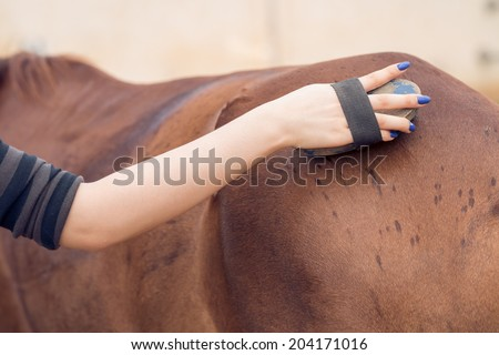 Close-up of hand brushing a horse - stock photo