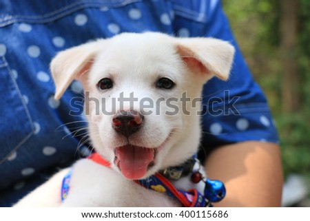 Close up of happy white puppy in woman hug, selective focused on nose