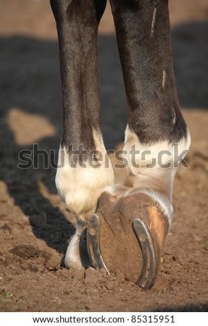 Close up of horse hoof with horseshoe - stock photo