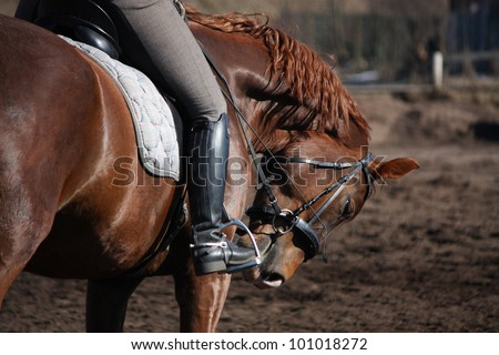 Close up of horse under the rider - stock photo