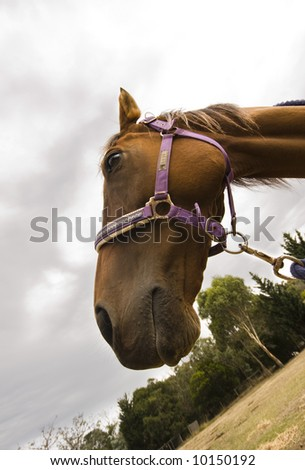 Close up of horse with sky for background