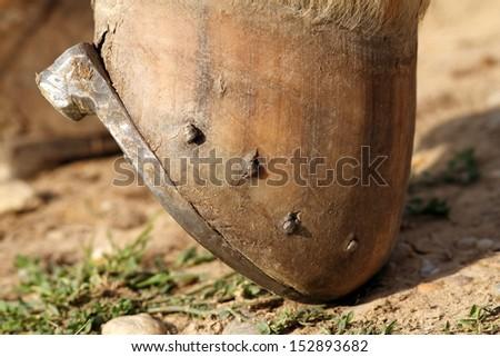 close up of horseshoe mounted on the hoof  - stock photo