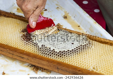 Close up of human hand extracting honey from honeycomb - stock photo