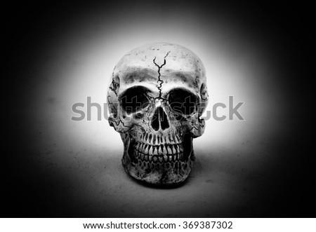Close up of Human skull on  grunge background - stock photo