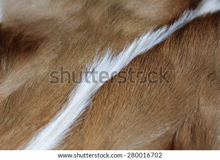 close up of impala hide or skin - stock photo