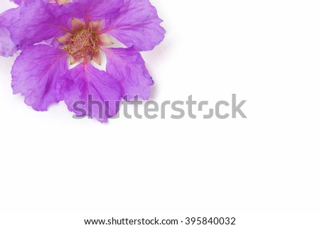 Close up of Inthanin flower or Lagerstroemia macrocarpa , Purple flower. - stock photo