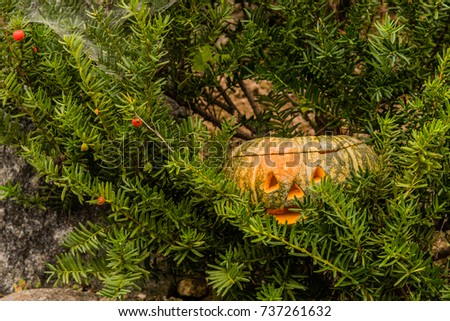 Close up of Jack-O-Lantern hiding in evergreen tree next to large boulder.