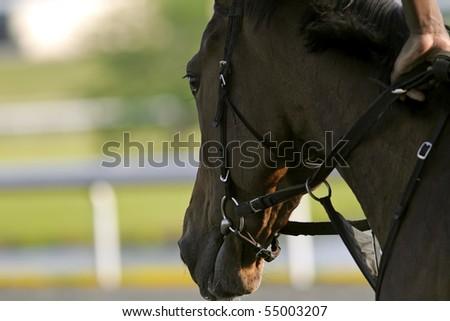 Close-up of Jockeys racing thoroughbreds at an early morning practice - stock photo
