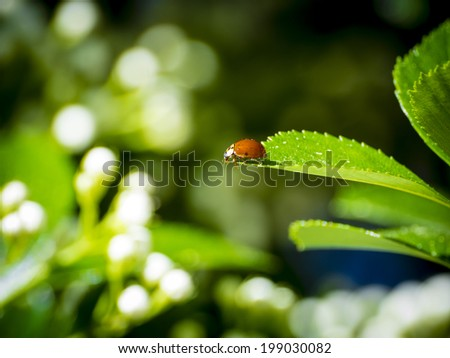 Close up of ladybug on a leaf