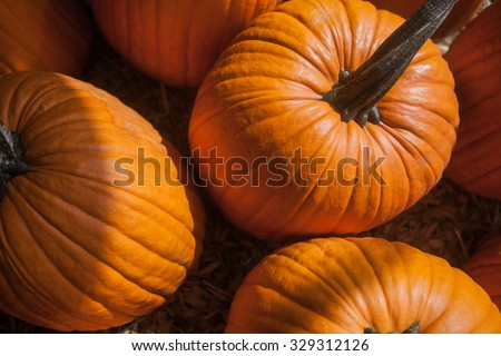 Close up of large orange pumpkin. Background for fall, autumn, Halloween. - stock photo