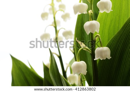 Close up of Lily of valley flower on white background - stock photo