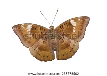 Close up of male mango baron butterfly on white background with clipping path  - stock photo