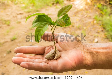 Close up of man hands and yong plant