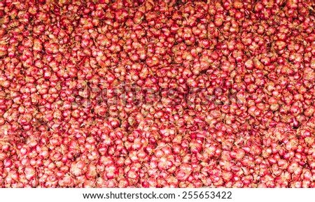 close up of Many heads of red onion on market stand - stock photo