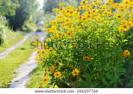 Close-up of  marigold flower in the sunlight - stock photo