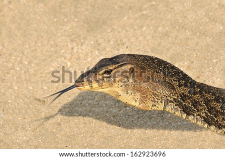 Close Up of monitor lizard. Cropping only on the head. - stock photo