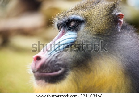 Close-up of monkey with closed eyes