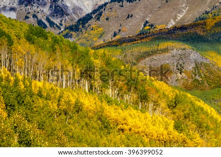 Close up of mountain sides filled with fall color of changing yellow Aspen trees and pine trees on sunny autumn morning - stock photo