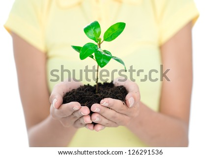 Close up of new plant in woman�¢??s hands - stock photo