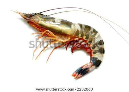 Close up of one prawn - stock photo