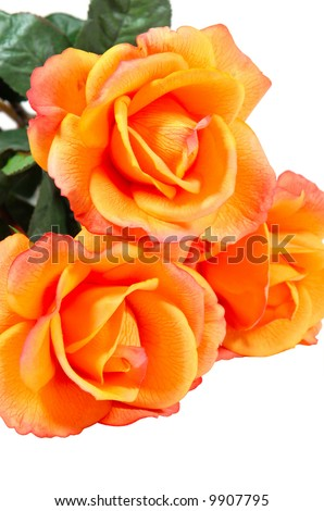 Close-up of orange artificial roses, isolated on white