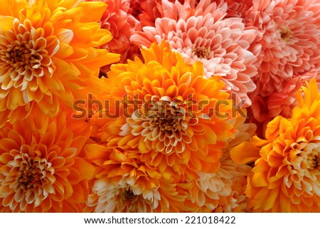 close up of orange aster flower bouquet - stock photo