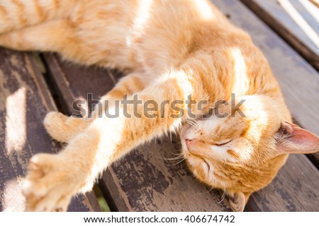 Close up of orange cat face stretching lie on wood bench background with sunlight