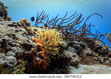 Close-up of orange, red, and branching  sponges and coral on reef - stock photo
