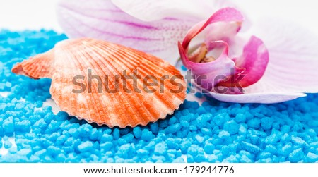 close up of orange wrinkled seashell with orchid and blue salt - stock photo