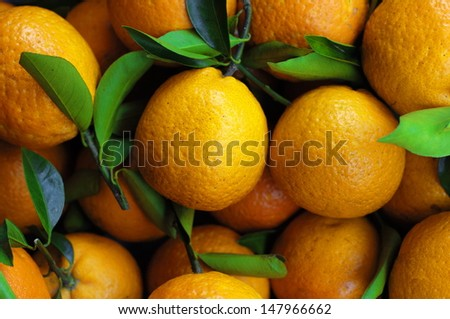 Close-up of oranges  - stock photo