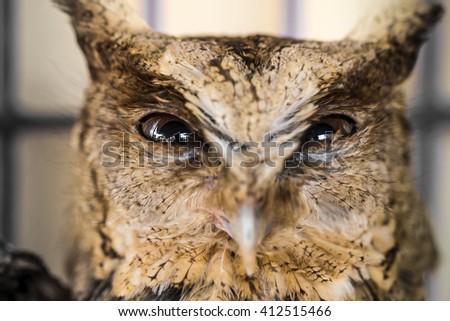 Close up of owl eye. Big Eyes. Wisdom - stock photo