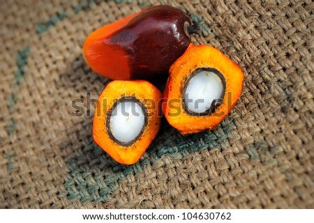Close up of Palm Oil fruits, selective focus.