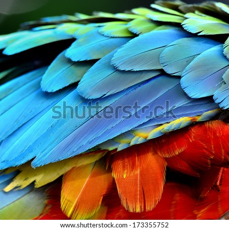 Close up of Parrot and Macaw bird feathers - stock photo
