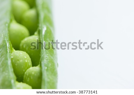 close up of pea pod