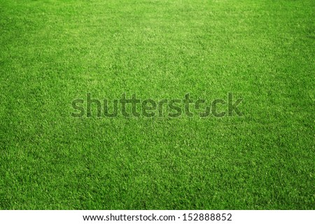 Close up of perfect green grass of the sport field or back yard with copy space - stock photo