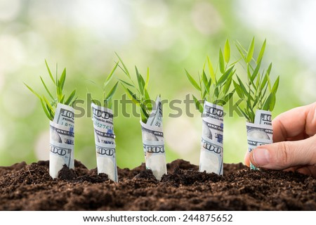 Close-up Of Person's Hand Planting Saplings Covered With American Dollars - stock photo