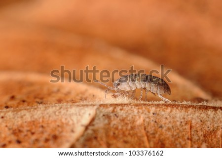 Close-up of Pill Bug or Roly-Poly on leaf - stock photo