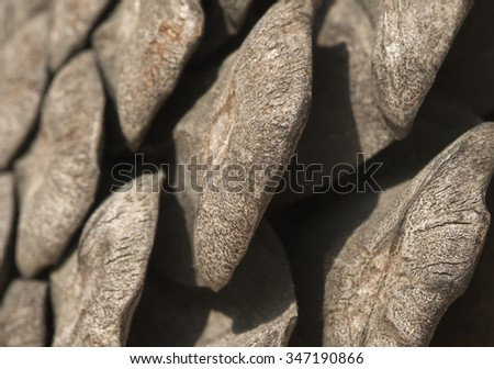 Close-up of pine cone for texture or background - stock photo