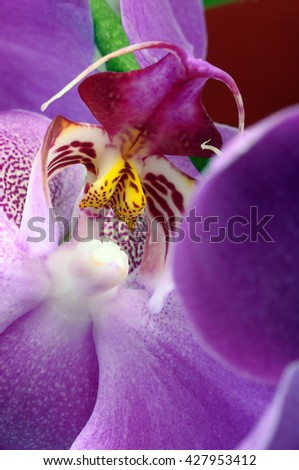 Close up of pink orchid flower