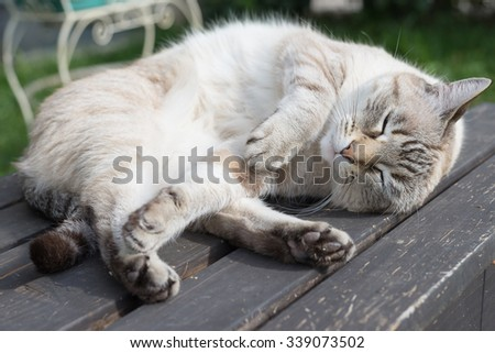 Close up of playful domestic cat lying on wooden bench. Shallow depth of field and focused on the eyes. - stock photo