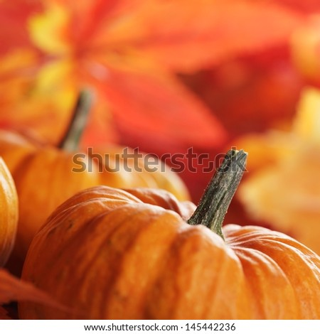 Close-up of pumpkins and autumn leaves background. Selective focus, shallow DOF. - stock photo