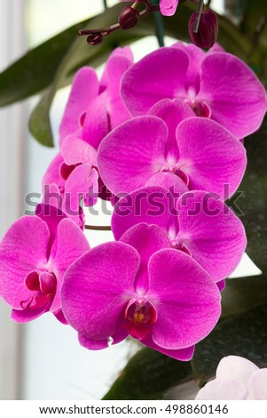 close up of purple blossom orchid