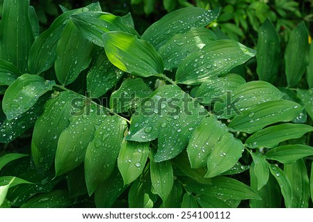 Close up of rain drops on leaves after rain - stock photo