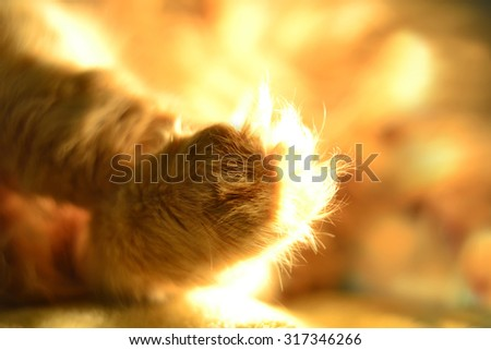 Close up of red cat's paw - stock photo
