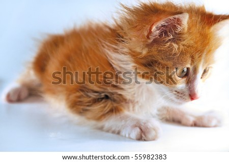 close-up of red-haired kitten playing