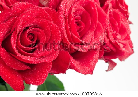 Close up of red rose bouquet with water drops - stock photo